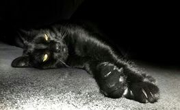 BlAck cat. At home stock images