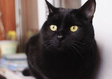 Black cat at home. Black cat on the window at home Royalty Free Stock Photography