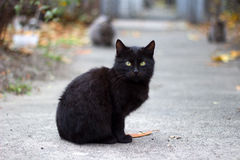 Black cat. A homeless black cat in the street Stock Photography