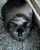 Black Cat Hunting in Construction Site and Ready to Pounce Royalty Free Stock Images
