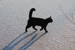 Black cat on ice. action 2. Young black cat with a shadow on the ice Royalty Free Stock Images