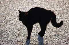 Black cat on ice. action 3. Young black cat with a shadow on the ice Royalty Free Stock Photos