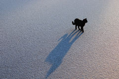 Black cat on ice. action 5. Young black cat with a shadow on the ice Royalty Free Stock Images