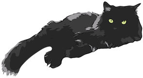 Black Cat Stock Images