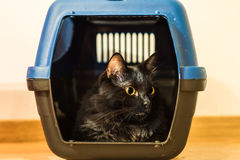 Black cat inside cage Royalty Free Stock Photo