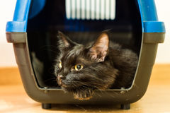 Black cat inside cage Stock Photography