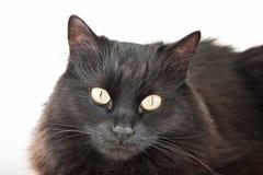 Black cat isolated Stock Photos