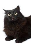 Black cat isolated Stock Photo