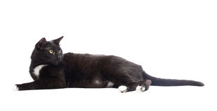 Black cat isolated Royalty Free Stock Image