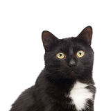 Black cat isolated Royalty Free Stock Photos