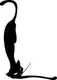 Black cat isolated on white Stock Photography