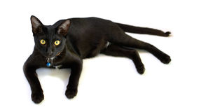 Black cat isolated Royalty Free Stock Images