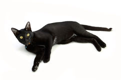 Black cat isolated Stock Photos