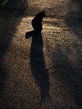 Black cat and its silhouette. Bangkok, Thailand-October 5,2016:A cat was sitting in Lumpini park, Bangkok, in the morning Stock Photos