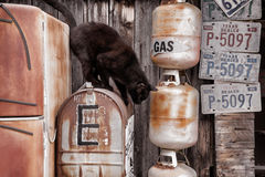 Black Cat Jumping from a Rusty Old Mailbox. A single black cat jumping from a rusty old mailbox surrounded by old license plates and gas cans in Austin, Texas Royalty Free Stock Photography
