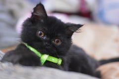 Black cat. The black kitten Stock Photos