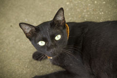 Black Cat. In Lanpang Thailand Stock Photography