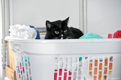 Black cat in laundry basket with clothes Stock Images