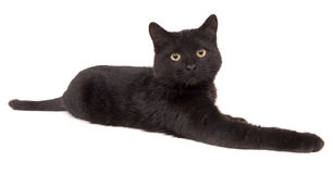 Black cat laying down (15mm) Royalty Free Stock Photography