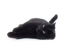 Black cat laying down Royalty Free Stock Photo