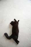 Black cat. A black cat laying down royalty free stock images