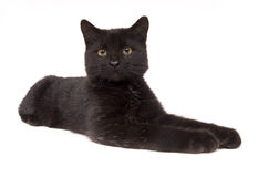 Black cat laying down looking straight ahead (15mm) Royalty Free Stock Photos