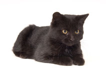 Black cat laying down and looking to right Royalty Free Stock Image