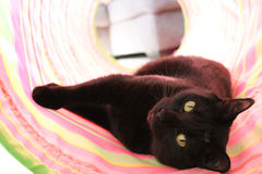 Black Cat. Laying in tunnel stock image