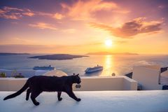 A black cat on a ledge at sunset at Fira town, with view of caldera, volcano and cruise ships, Santorini, Greece. Cloudy dramatic sky royalty free stock image