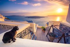 A black cat on a ledge at sunset at Fira town, with view of caldera, volcano and cruise ships, Santorini, Greece. Cloudy dramatic sky Royalty Free Stock Photography