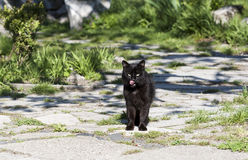 Black cat licking lips - RAW format Stock Photo