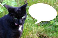 A black cat licks her mouth. A cat finds the food tasty.  Stock Photography