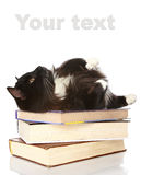 The black cat lies on books Royalty Free Stock Photos