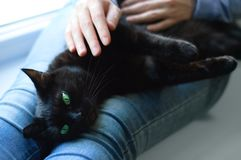 Black cat lies in the hands Caucasian girl. Close-up royalty free stock images