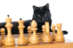 Black cat lies near the chessboard isolated on white background Royalty Free Stock Photography