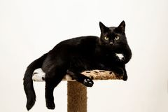Black cat lies on a cat`s place, white background. Stock Images