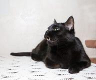 Black cat lies Stock Photo