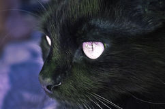 Black cat. Look close up royalty free stock photo