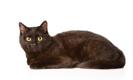 Black cat looking at camera. isolated on white background Stock Photo