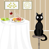 Black cat looking for food Stock Images