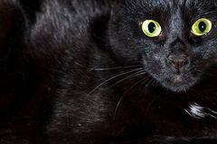 Free Black Cat Looking In Camera Royalty Free Stock Photo - 155712915
