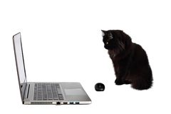 Black cat looking at laptop. Stock Photos