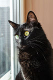 Black cat looking out the window. Black cat sits on the sill and looking out the window Royalty Free Stock Photo