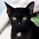 Black cat looking, square type Stock Photo