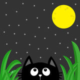 Black cat looking stars and moon in the dark night.. Green grass dew drop. Cute cartoon character. Kawaii romantic animal. Love Greeting card. Flat Gray Royalty Free Stock Photo