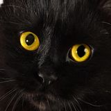 Black cat looking to you Stock Photo