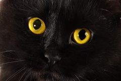 Black cat looking to you with bright yellow eyes Stock Image