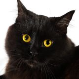 Black cat looking to you Stock Images