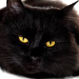 Black cat looking to you with bright yellow eyes Royalty Free Stock Image