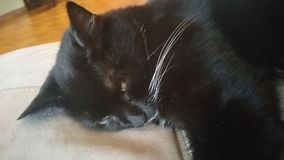 BLACK CAT. Cat looking unimpressed while sleeping Stock Images